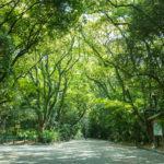 アクセス抜群!名古屋市緑区で評判のホワイトニング2選